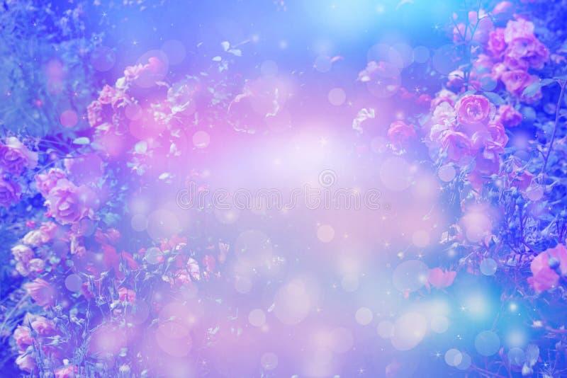 Fundo sonhador artístico das rosas bonitas com luzes do bokeh e quadro floral imagem de stock