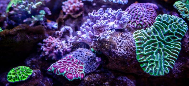 Fundo subaquático da paisagem do recife de corais fotos de stock royalty free