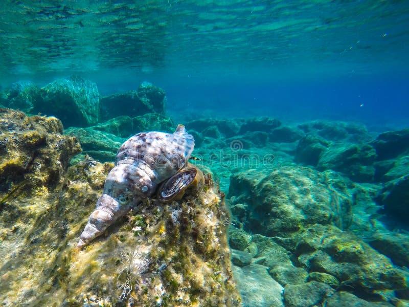 Fundo subaquático da vida marinha fotos de stock royalty free