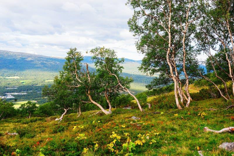 Fundo subdimensionado da paisagem das árvores da montanha de Noruega imagens de stock royalty free