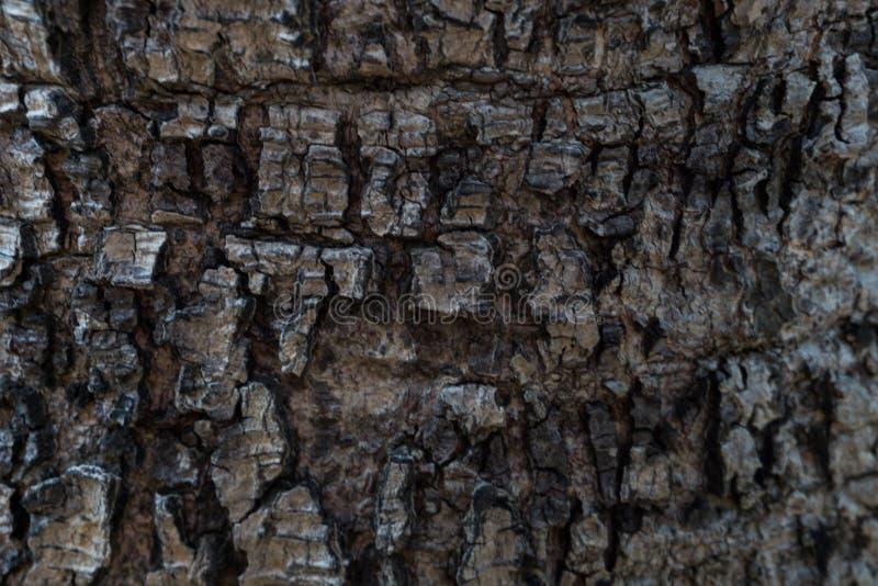 Fundo/textur da casca de árvore imagens de stock royalty free