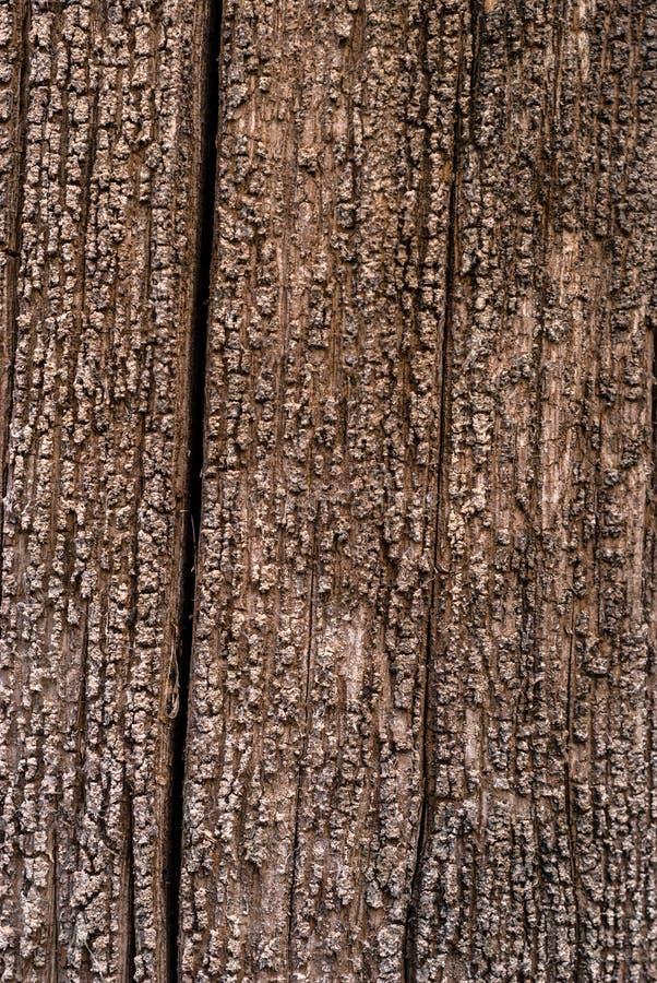 Fundo - textura de uma árvore podre fotografia de stock
