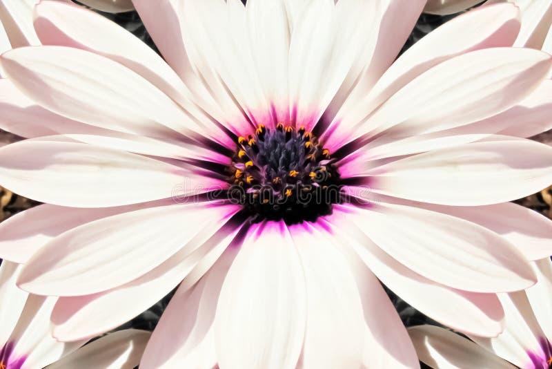 Fundo, textura do fim da flor branca acima ilustração do vetor