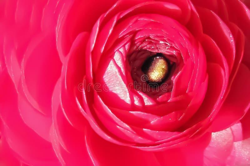 Fundo, textura do fim vermelho da flor acima ilustração stock