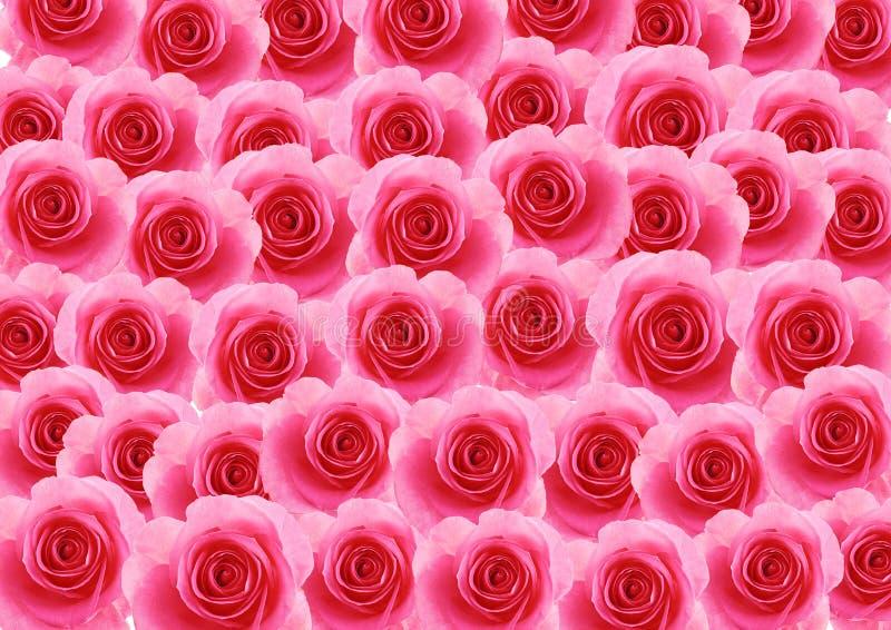Fundo textured flores da rosa do rosa imagens de stock royalty free
