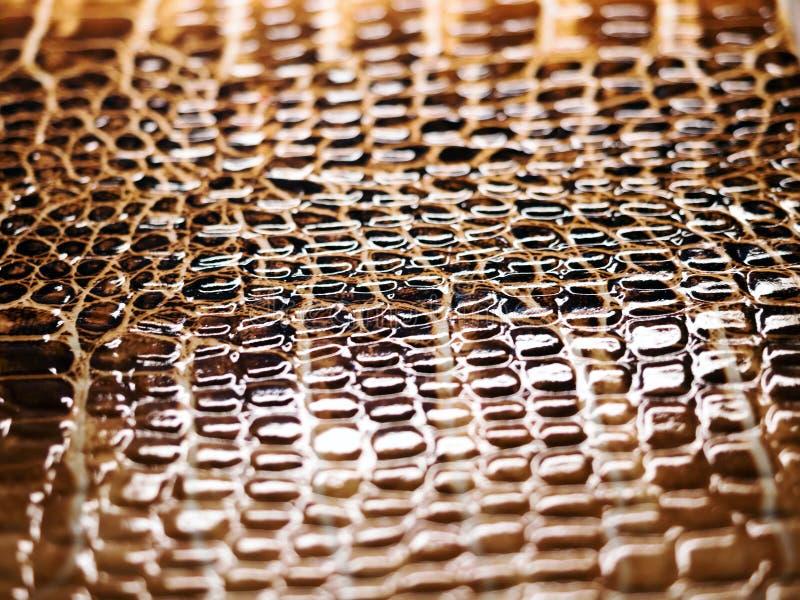 Fundo textured pele do jacaré de Brown imagem de stock royalty free
