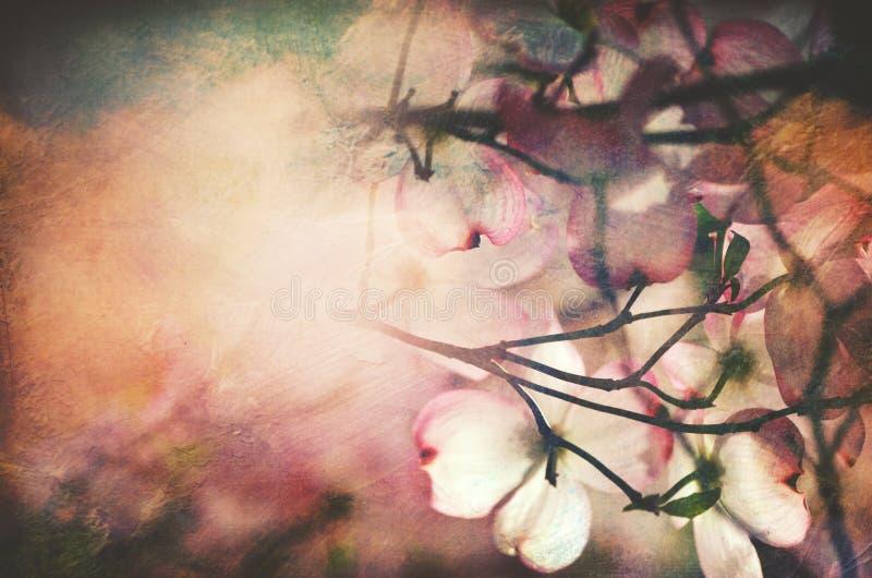 Fundo textured vintage da flor do corniso da mola imagem de stock