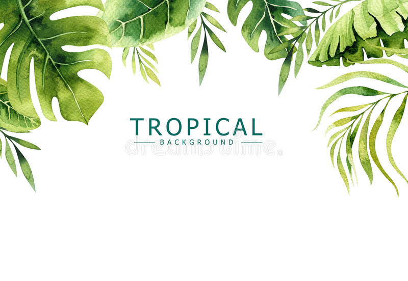 Fundo tirado mão das plantas tropicais da aquarela Folhas de palmeira exóticas, árvore da selva, elementos borany tropicos de Bra ilustração do vetor