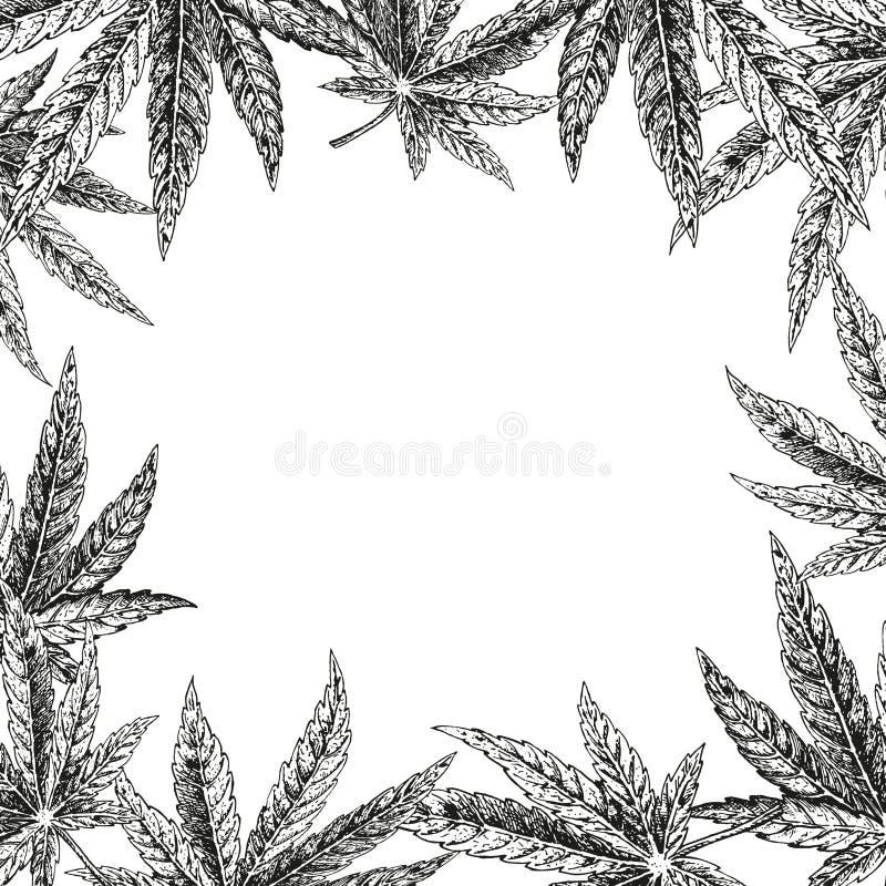 Fundo tirado mão do cânhamo Folha do cannabis Esboço do vetor da marijuana Projeto da disposição para empacotar ilustração royalty free