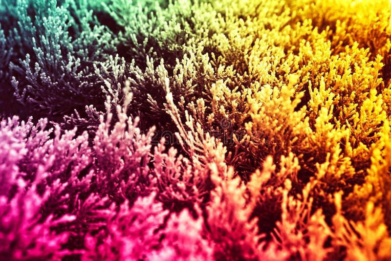 Fundo Tricolor do sumário amarelo, verde, cor-de-rosa plantas imagem de stock royalty free
