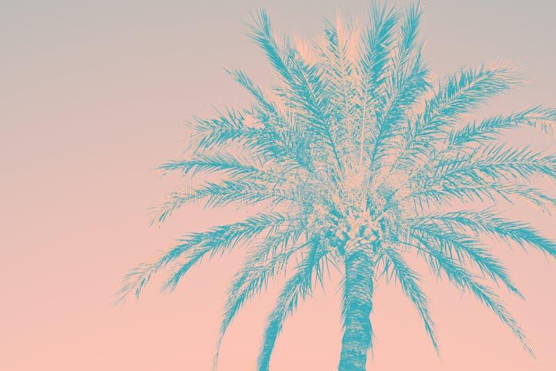 Fundo tropical abstrato da natureza A silhueta da cerceta cor-de-rosa do vintage da palmeira tonificou o efeito sujo desvanecido  imagens de stock