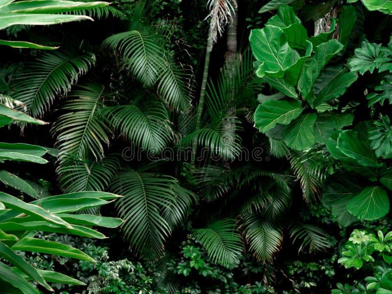 Fundo tropical da paisagem da floresta úmida Palmas, árvores e plantas tropicais da selva imagens de stock royalty free