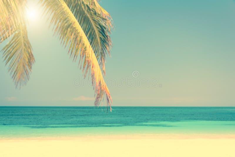 Fundo tropical da praia e da palmeira, c?u ensolarado, conceito do ver?o do vintage fotos de stock