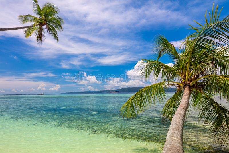 Fundo tropical da praia - ressaca do mar calmo, palmeiras e céu azul foto de stock royalty free