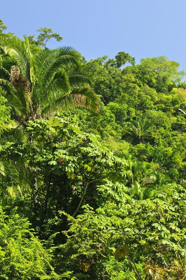 Fundo tropical da selva imagem de stock