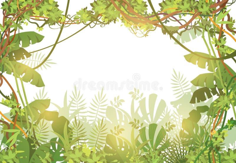 Fundo tropical da selva Floresta úmida com folhas e as videiras tropicas da liana Paisagem da natureza com árvores tropicais Veto ilustração do vetor