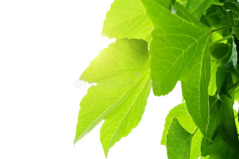 Fundo tropical da textura da folha do verde da natureza Conceito tropical da aventura da floresta e do curso imagem de stock royalty free