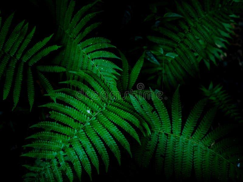 Fundo tropical das folhas, teste padrão verde do fundo foto de stock