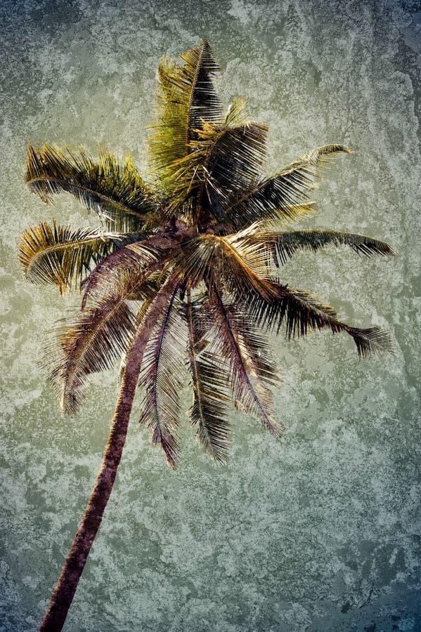 Fundo tropical do Grunge com palmeira do coco imagem de stock