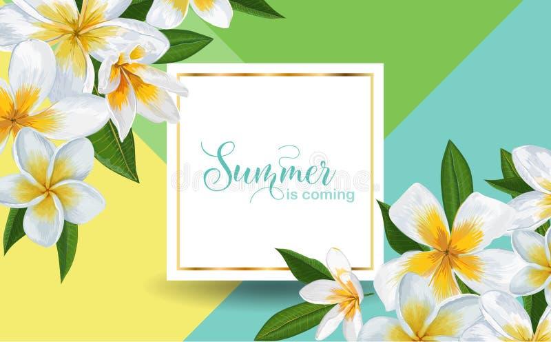 Fundo tropical do verão com flores e folhas de palmeira do Plumeria Projeto tipográfico exótico para anunciar, inseto ilustração do vetor