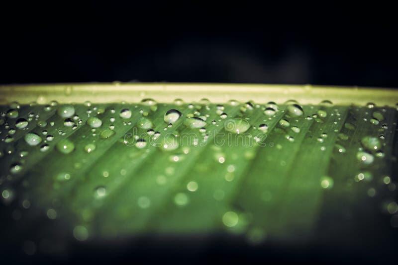 Fundo tropical escuro da folha de palmeira da selva imagem de stock