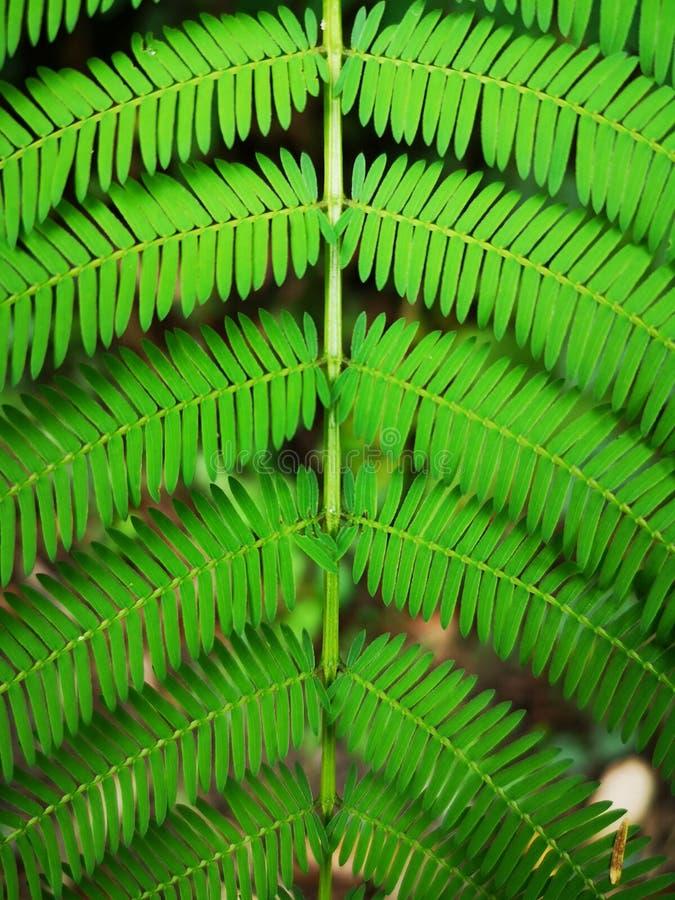 Fundo tropical verde da folha da samambaia fotos de stock royalty free