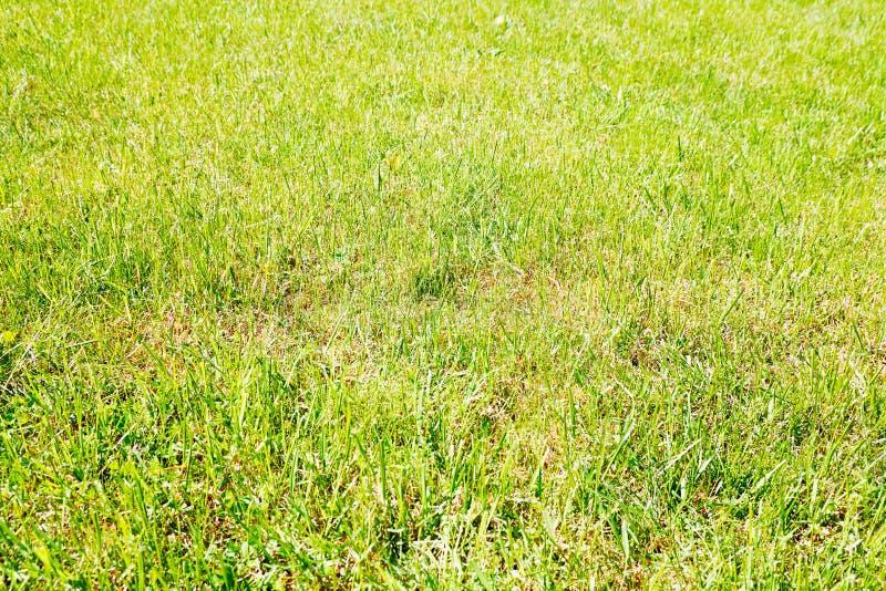 Fundo vívido da textura da grama do verão fotos de stock