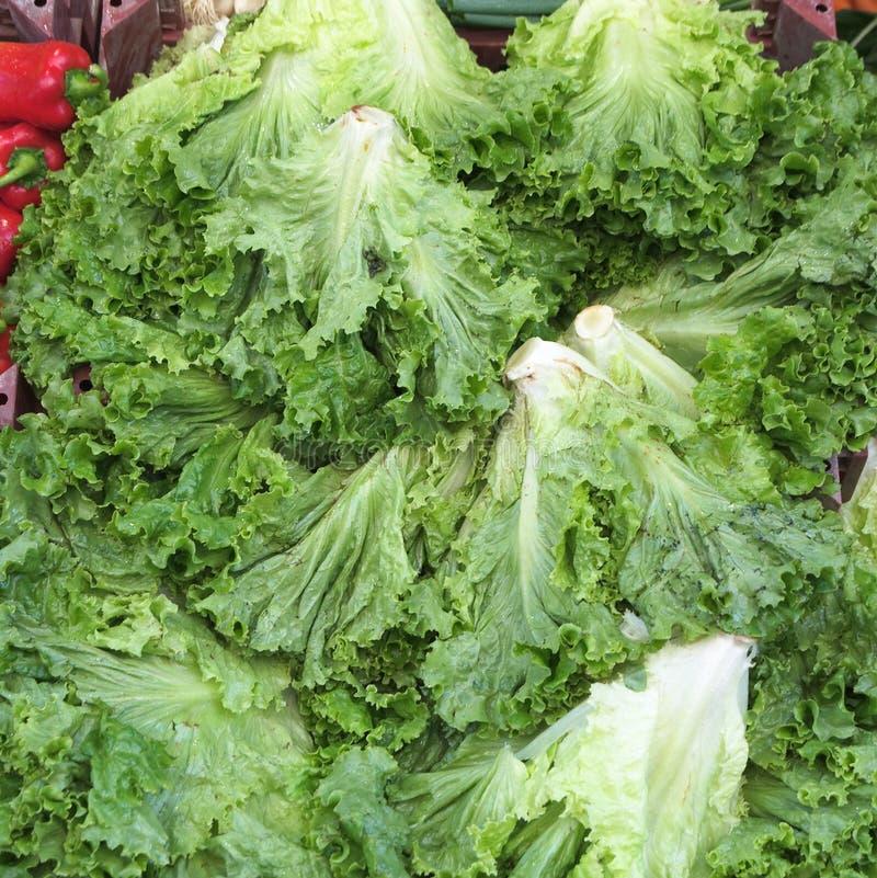 Fundo vegetal verde imagem de stock