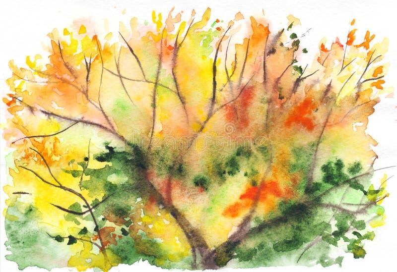 Fundo verde alaranjado da folha da árvore do amarelo do outono da aquarela ilustração royalty free