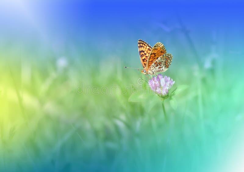 Fundo verde bonito da natureza Borboleta Copie o espaço Papel de parede artístico colorido Fotografia macro natural Azul, cores,  fotografia de stock royalty free