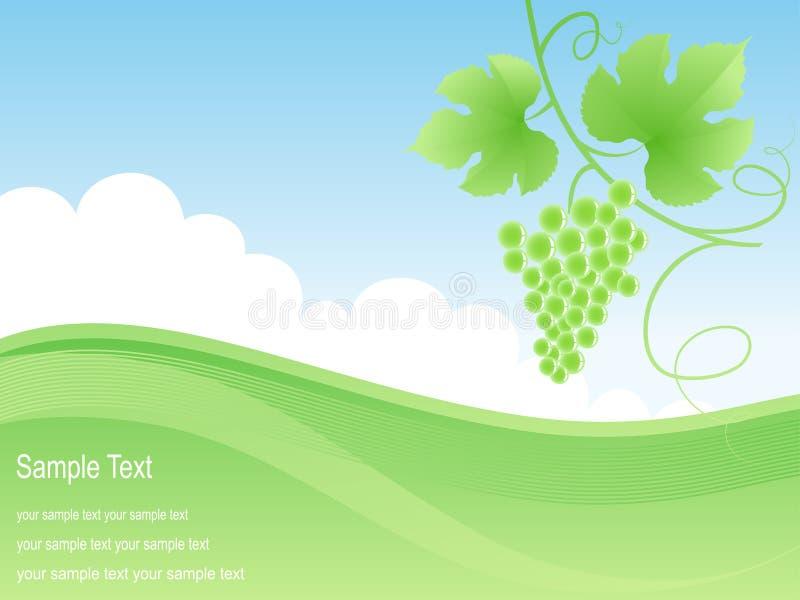 Fundo verde bonito do campo e da uva. ilustração do vetor