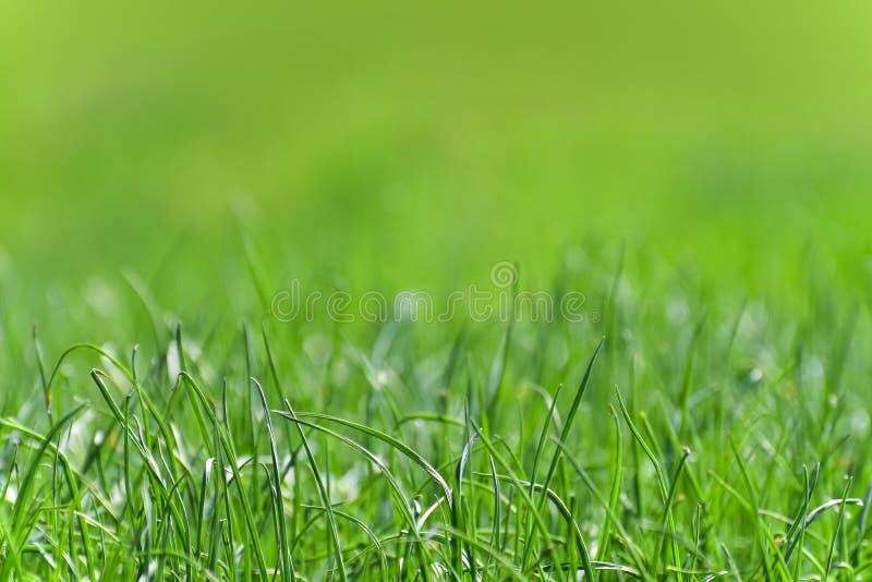 Fundo verde bonito e perfeito pela grama fresca imagens de stock