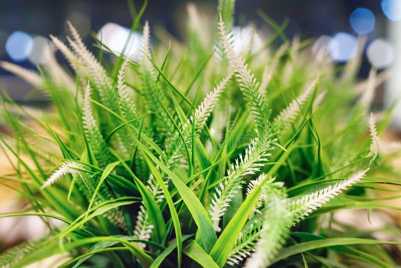Fundo verde borrado da grama e das plantas com efeito do bokeh fotografia de stock