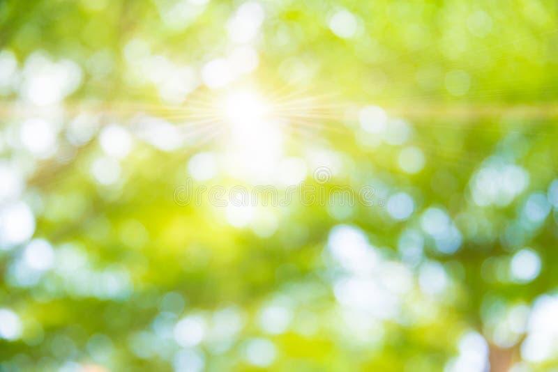 Fundo verde da árvore do borrão no jardim do parque imagem de stock royalty free
