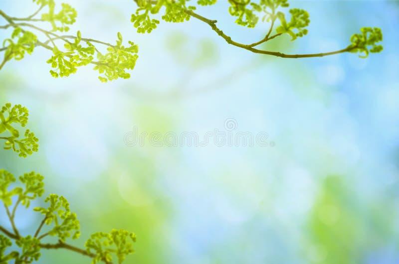 Fundo verde da estação de mola com ramos, folhas, botões e bokeh no céu azul fotografia de stock royalty free