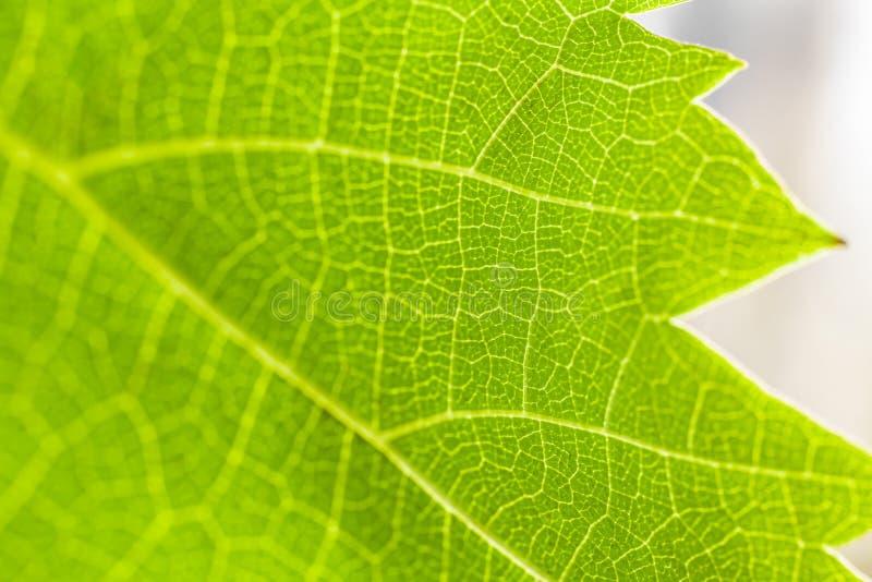 Fundo verde da folha imagens de stock