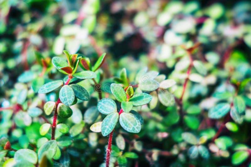 Fundo verde da folha Fundo minúsculo da folha da planta verde Foto macro imagens de stock