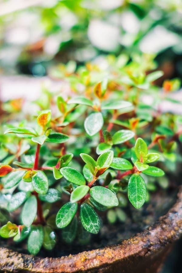 Fundo verde da folha Fundo minúsculo da folha da planta verde Foto macro fotos de stock