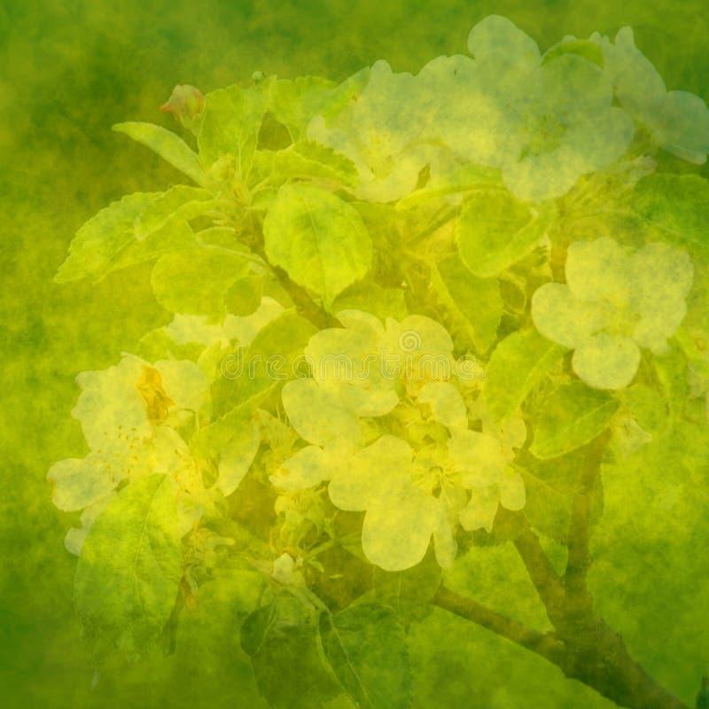 Fundo verde da mola com flores da maçã ilustração royalty free