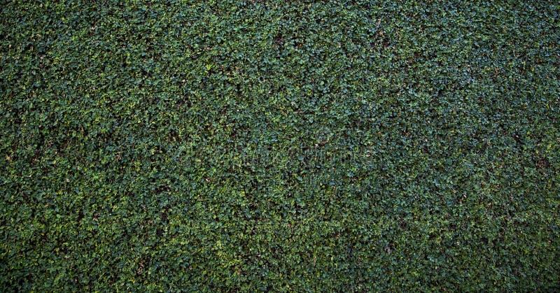 Fundo verde da parede da conversão foto de stock royalty free
