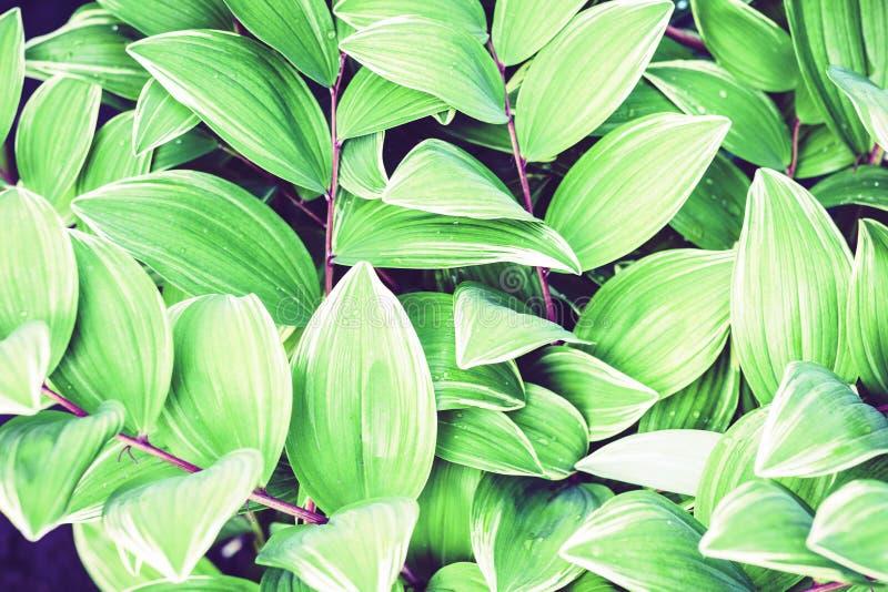 Fundo verde da textura das folhas, plantas em um jardim foto de stock royalty free