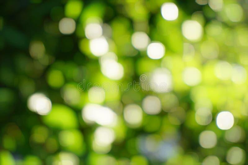 Fundo verde de Bokeh da natureza imagem de stock royalty free