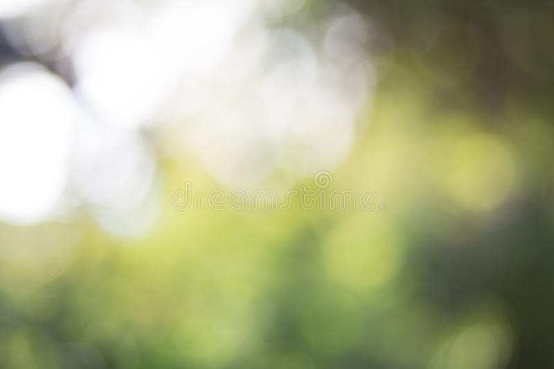Fundo verde do bokeh da folha, fundo abstrato foto de stock royalty free