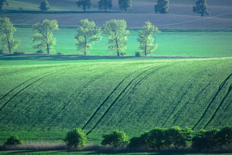 Fundo verde e cinzento do sumário do campo da mola foto de stock royalty free