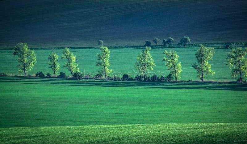 Fundo verde e do tirquoise da mola do campo do sumário imagem de stock royalty free