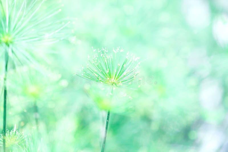 Fundo verde macio do sumário da natureza fotos de stock royalty free