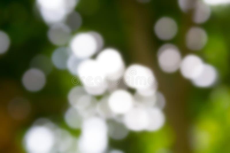 Fundo verde natural de Bokeh, fundos abstratos imagens de stock