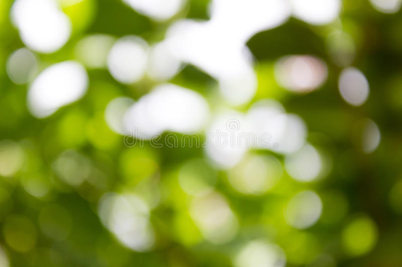 Fundo verde natural de Bokeh, fundos abstratos foto de stock royalty free