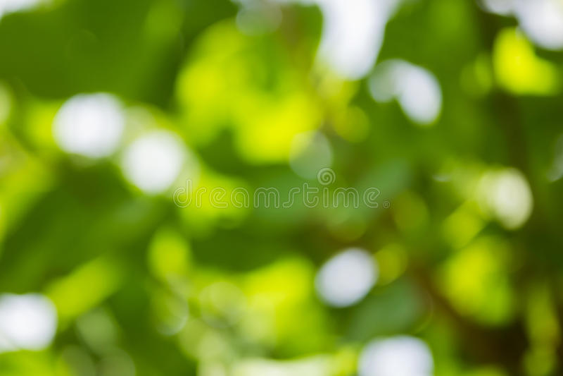 Fundo verde natural de Bokeh, fundos abstratos imagem de stock