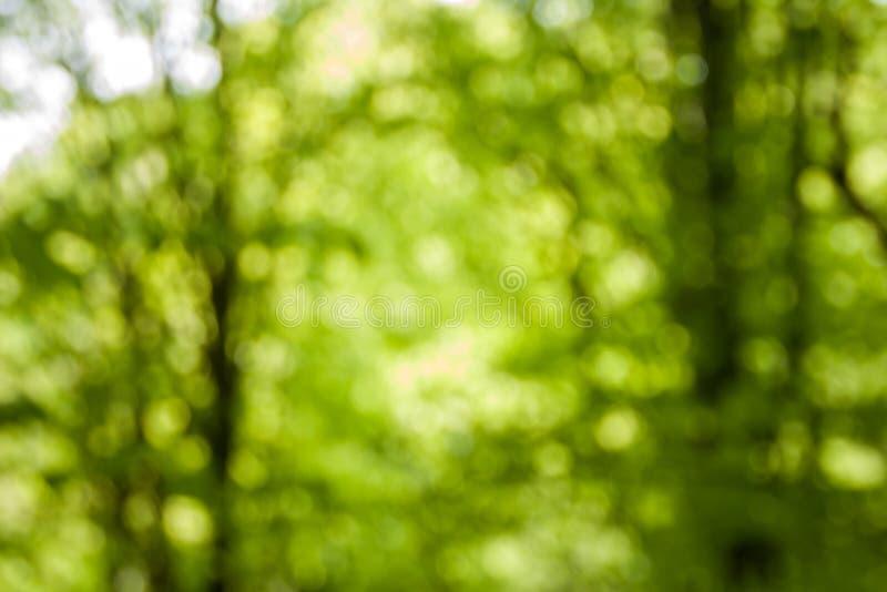 Fundo verde natural Defocused da floresta no dia ensolarado foto de stock